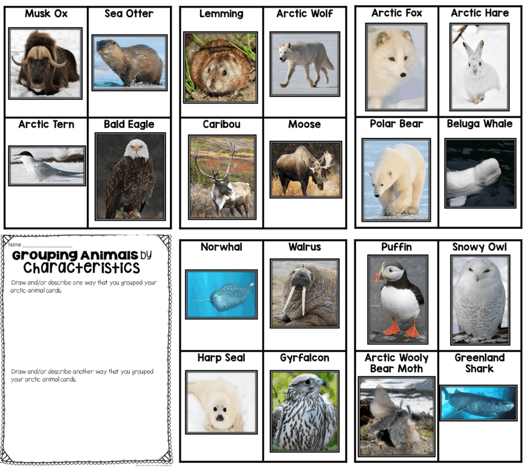 What Animals Live In The Arctic For Kids
